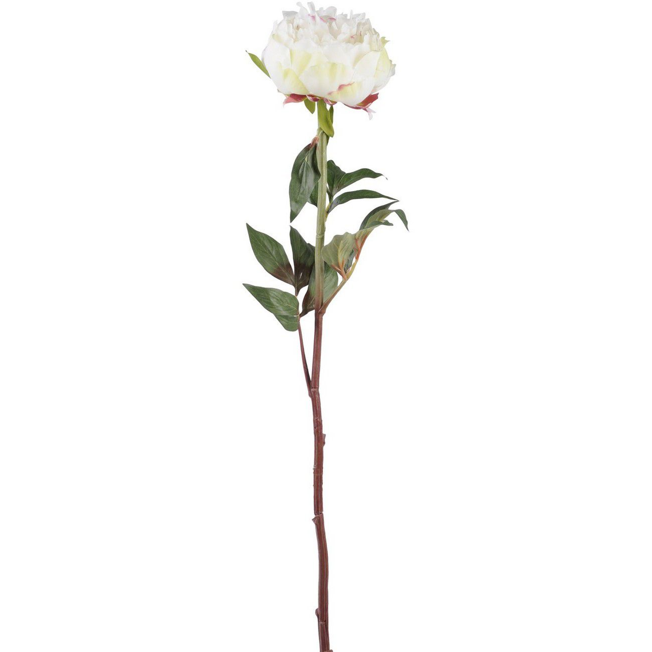 Faux White Peony Spray With Leaves 69cm thumbnail