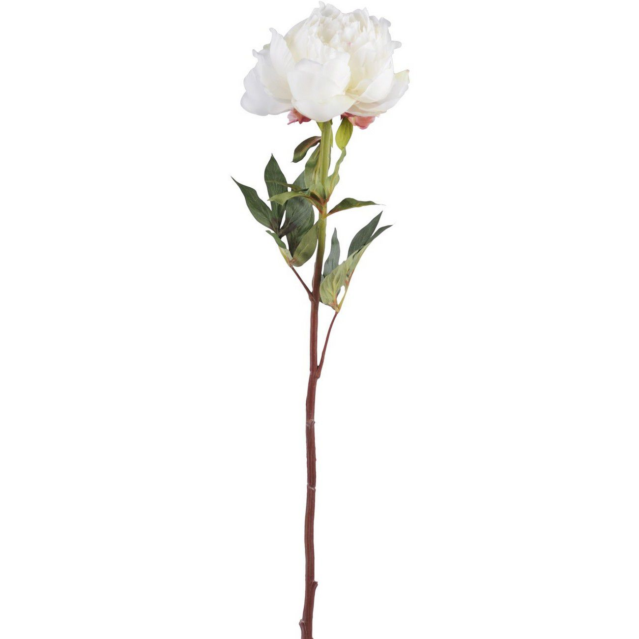 Faux White Open Bloom Peony Spray With Leaves 70cm thumbnail