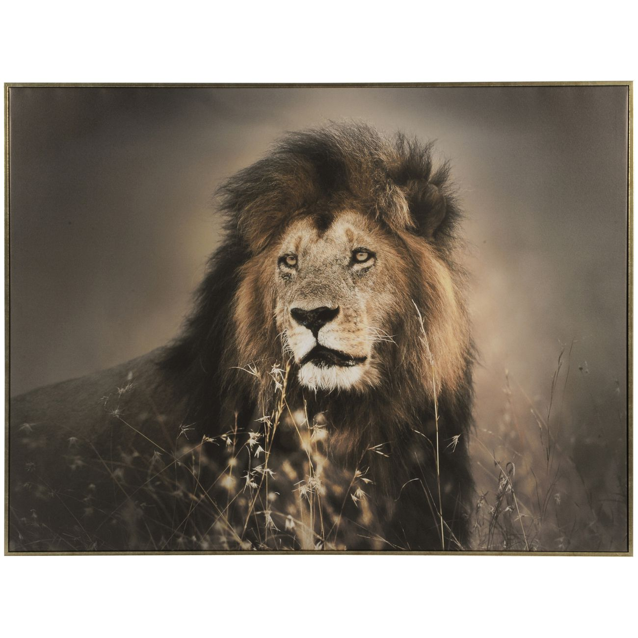 Lion Framed Canvas Wall Art 80x113cm thumbnail