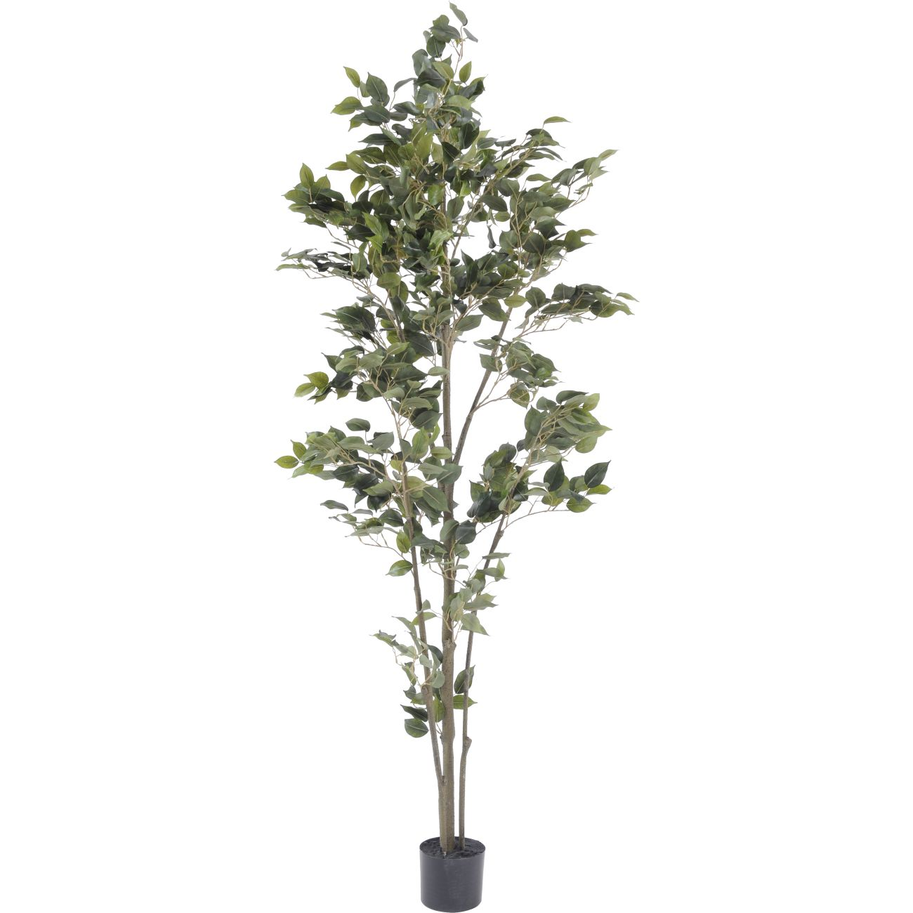 Faux Potted Ficus Tree, 182cm thumbnail